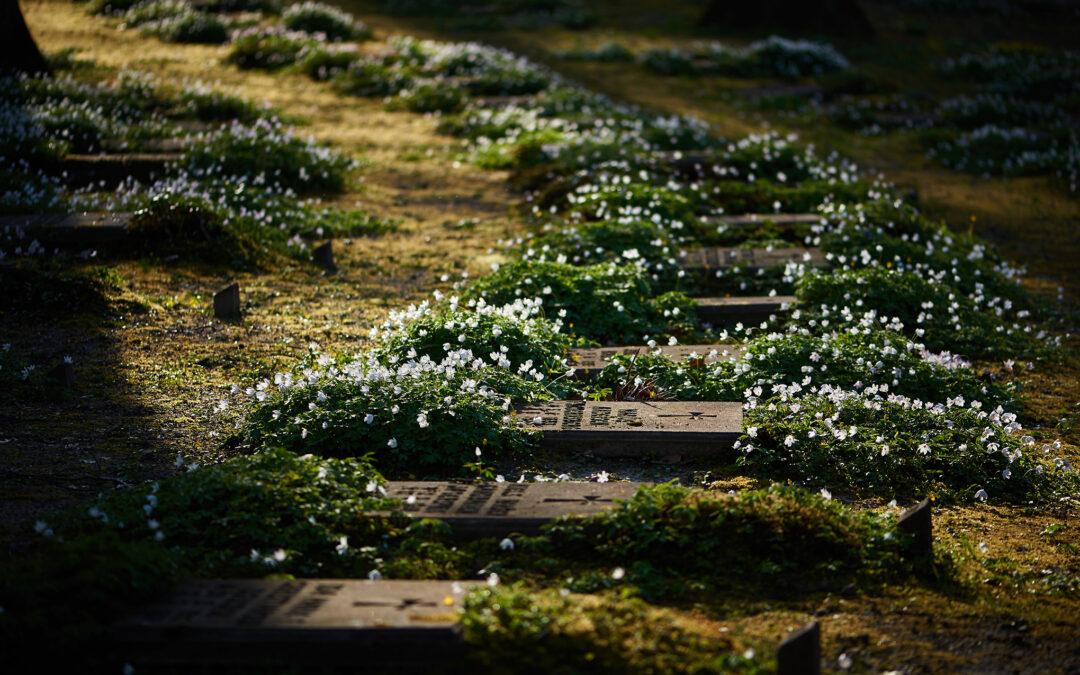 De Hjerneløses Kirkegård