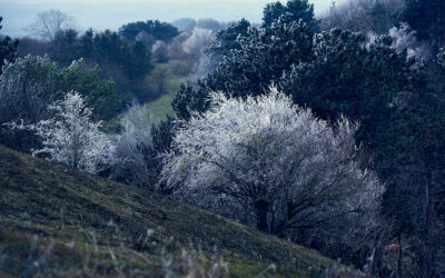 Isglaserede træer